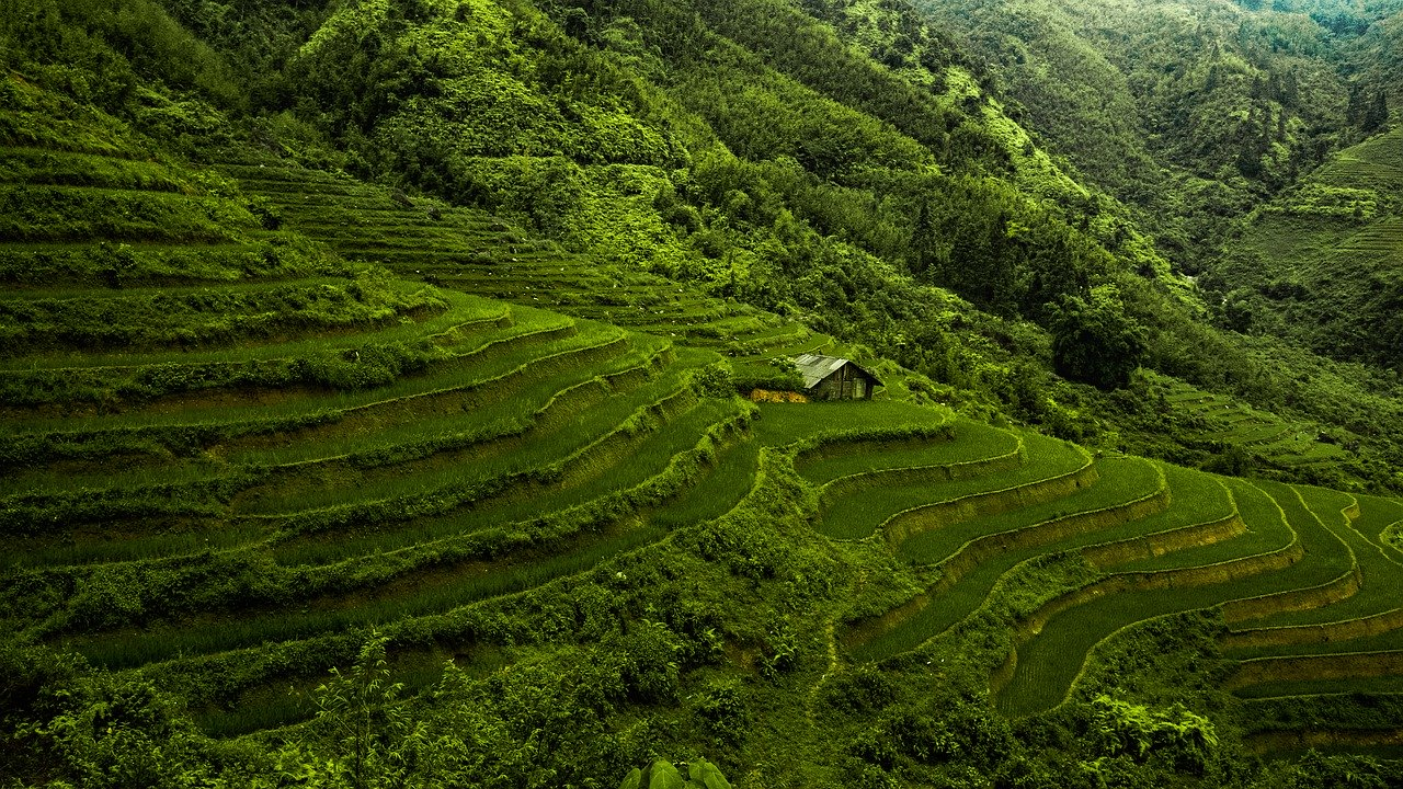 asia, vietnam, rice paddy